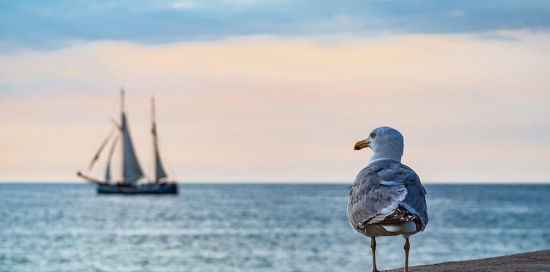 Fünf der schönsten Segelplätze in Deutschland