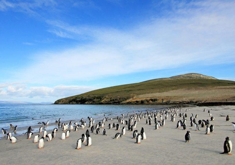 Segeltörn Falklandinseln: Raue Natur und viele Pinguine